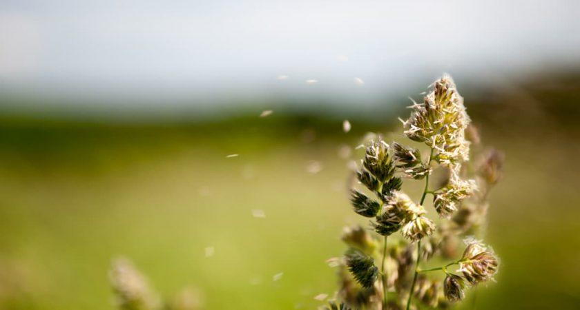 Rimedi naturali per le allergie stagionali